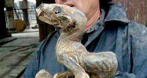 'Monstro mumificado' foi achado em mina de diamantes na Sibéria (Foto: Reprodução/Facebook/Shipwreckhunter)