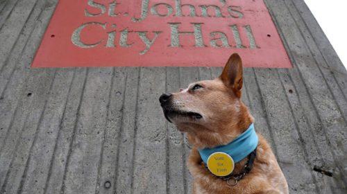 Cão é lançado 'candidato' a prefeito no Canadá