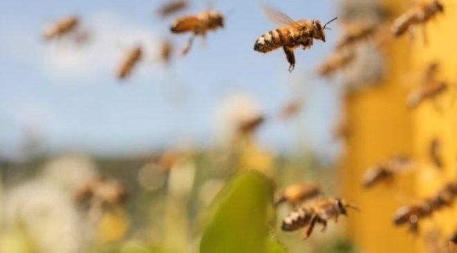 Idoso morre após ser atacado por enxame de abelhas